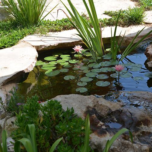 אלמנטים של מים בגינה