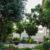 בחירת עצים לגינה הפרטית