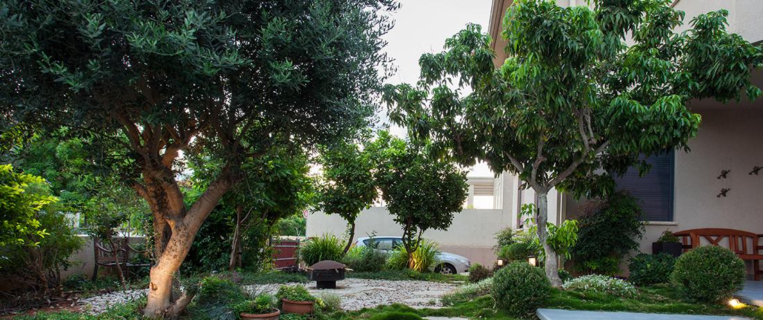 בחירת עצים לגינה הפרטית – טיפים חשובים